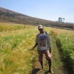MDG_2014_Colleges_agricoles_Misaina_champs orge_jeune_01bis