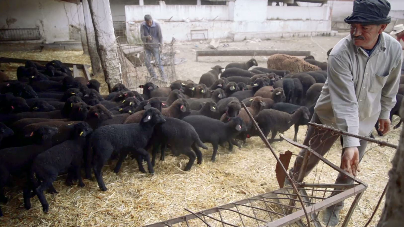 The agricultural development group of sheep breeders from
