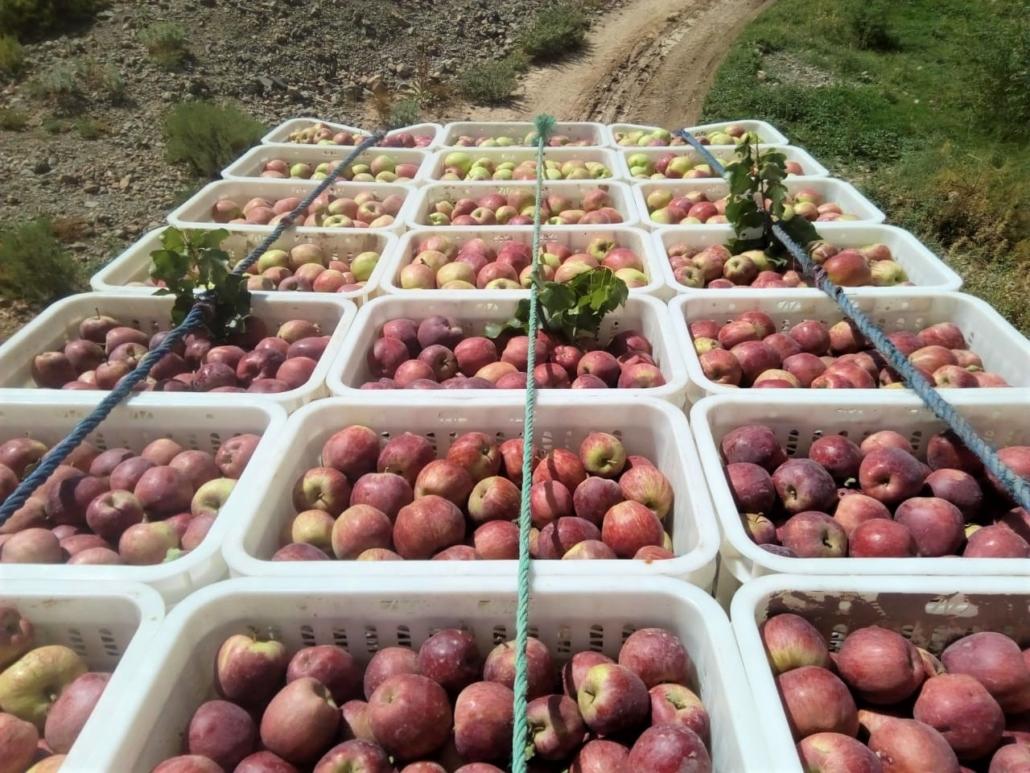 Caisses de pommes à Takbilte